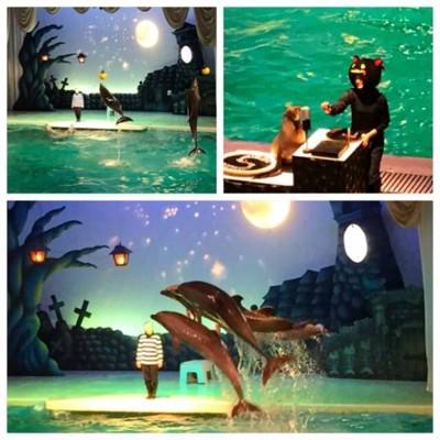 イルカやアシカのショー