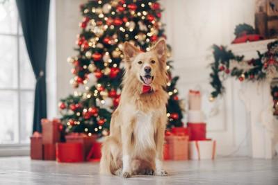 クリスマスツリーの前に座る犬