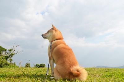 空と犬の写真