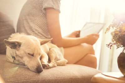 飼い主の横で寝る犬