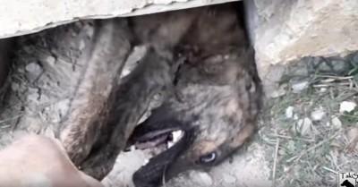 穴から引き出される犬