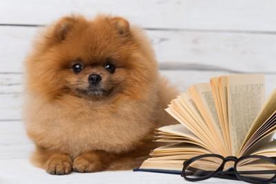 ポメラニアンと本と眼鏡