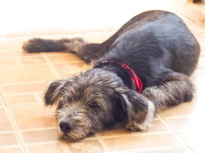 玄関で苦しそうに寝る犬
