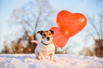 ハートの風船と犬