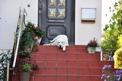 玄関の前で待つ犬