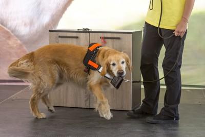 財布を咥えている介助犬