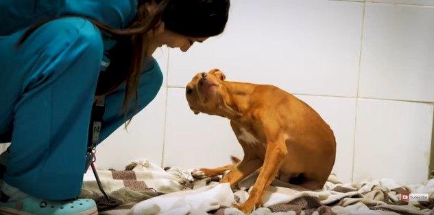 犬と看護師