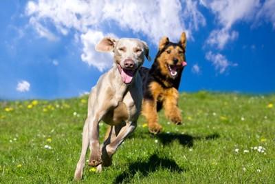 楽しそうに走っている犬