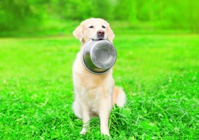 芝生の上で食器を咥えて座る犬