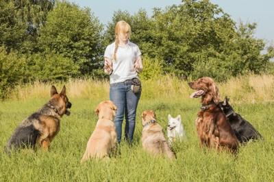 数頭の犬を訓練するドッグトレーナー