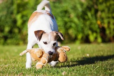 おもちゃを獲物と判断している犬