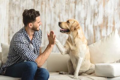 ソファーで男性の手と前足を合わせている犬