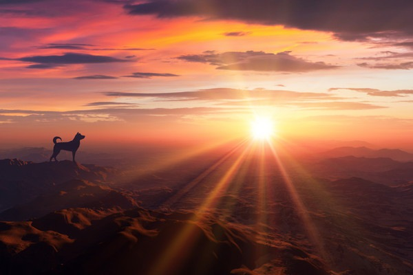 山の頂上で朝日を浴びている犬