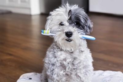 歯ブラシをくわえて座る犬