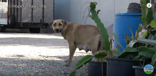 振り返って警戒する母犬