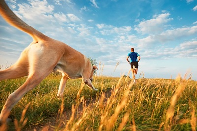 走る男性を追って走る犬