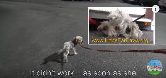 保護活動に参加する保護犬