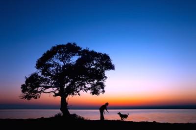 夕方に湖畔を散歩する女性と駆け寄る犬