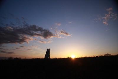 遠くに見える犬の影