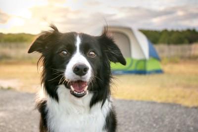 犬と後方にテント