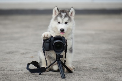 カメラを構える犬