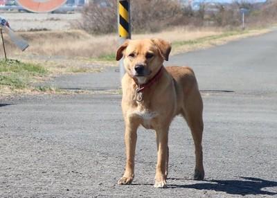 道路に佇んでいる迷い犬