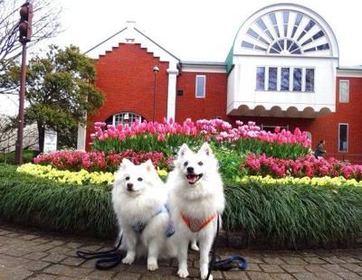 花壇の前の犬