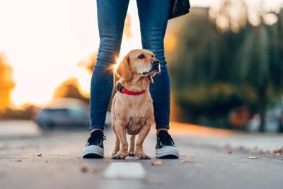 足の間に立つ犬