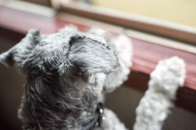 窓ごしに外を眺める犬
