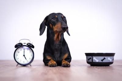 時計と食器前の犬