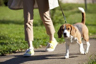 散歩する飼い主と犬