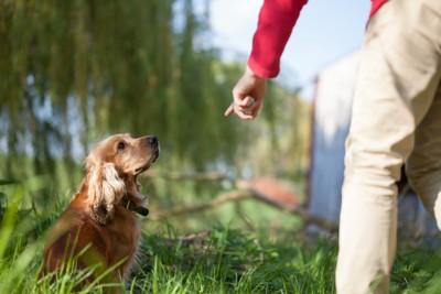 指を見ている犬
