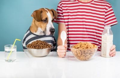 人の食事がほしい犬