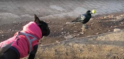 鳥とココちゃん