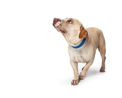 怯えて見上げる犬