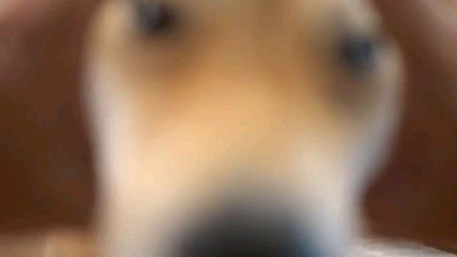 輪に顔を入れる犬