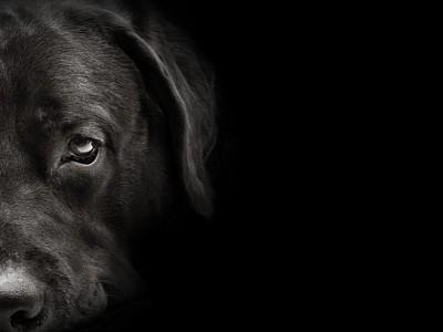 こちらを見ている黒犬
