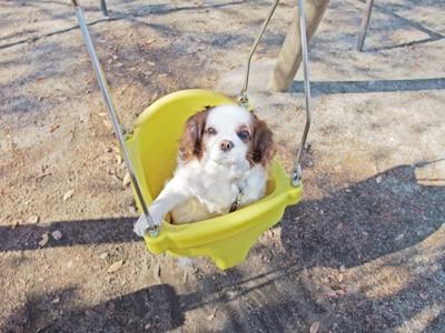 ブランコに乗っている犬