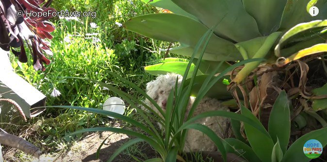 茂みに隠れる犬