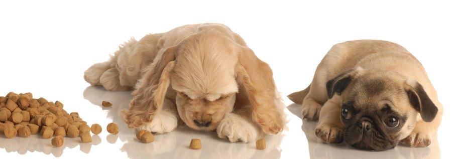 片方の犬だけご飯を食べている