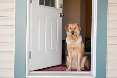 白いドアの横に座る犬