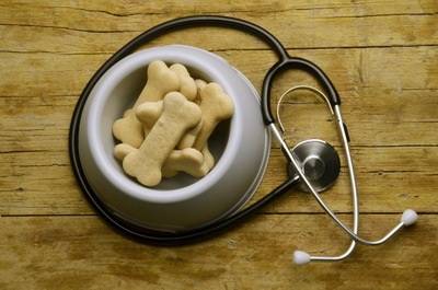 犬の餌と聴診器