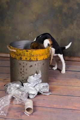 ゴミ箱に顔を突っ込むビーグル犬