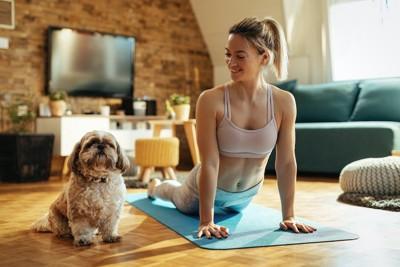 室内でヨガをする女性と同じポーズをとる犬