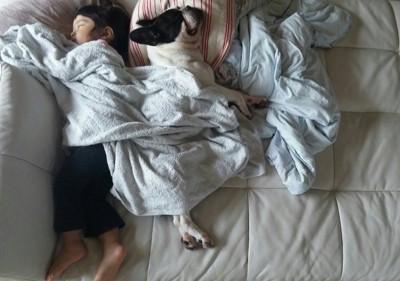 一緒の布団で眠る女の子とフレンチブル