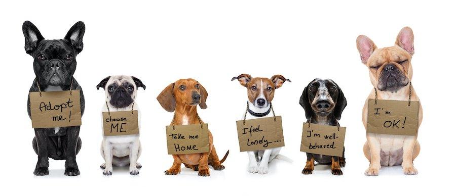 家族募集中の札を下げた犬たち