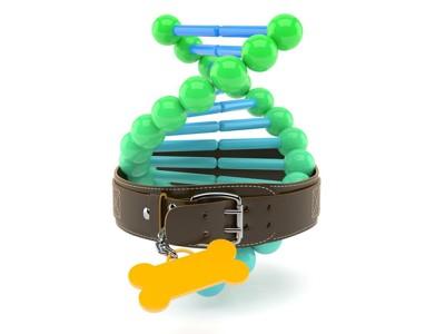 犬の首輪をつけたDNAの模型