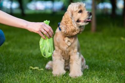 犬のうんち袋を持つ飼い主の手