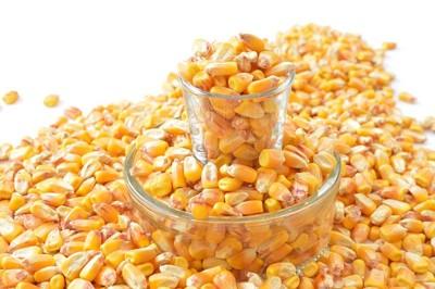 トウモロコシの粒の写真