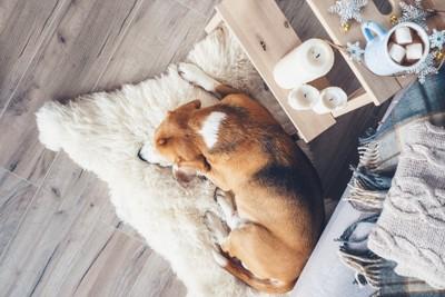 カーペットの上で寝ている犬